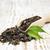 сушат · листьев · мат · чай · зеленый · медицина - Сток-фото © es75