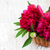 beautiful bouquet of pink peony stock photo © es75