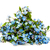 forget me nots flowers stock photo © es75