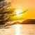 zonsondergang · strand · boom · natuur · landschap - stockfoto © esatphotography