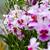 Szingapúr · orchideák · virág · természet · zöld · növény - stock fotó © esatphotography