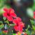 красный · гибискуса · цветок · природного · зеленый · bokeh - Сток-фото © escander81