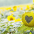 sunflower with heart shaped figure on natural bokeh background stock photo © escander81
