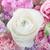 удивительный · букет · пастельный · цветами - Сток-фото © Escander81