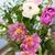 amazing rose tulips in vase stock photo © escander81