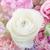 florista · flores · de · primavera · colorido · primavera · modelo · de · trabajo - foto stock © escander81