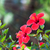 красивой · желтый · закрывается · цветок · красный · лепестков - Сток-фото © escander81