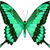 синий · бабочка · изолированный · белый · весны · свет - Сток-фото © essl