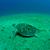 teknős · Vörös-tenger · hal · tájkép · tenger · háttér - stock fotó © evgenybashta