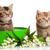 愛らしい · かわいい · 子猫 · 花 · ボックス · 子猫 - ストックフォト © ewastudio