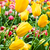 belle · fleurs · du · printemps · tulipes · herbe · feuille · été - photo stock © EwaStudio
