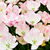 primavera · beleza · vermelho · tulipas · naturalismo · borrão - foto stock © ewastudio