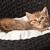 adorável · gatinho · adormecido · cesta · bebê · gato - foto stock © ewastudio