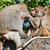 monkey family stock photo © ewastudio