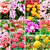 tulipany · kolaż · wiosennych · kwiatów · charakter · lata · zielone - zdjęcia stock © ewastudio
