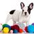 francese · bulldog · cucciolo · lana · isolato - foto d'archivio © EwaStudio