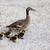 família · mãe · natação · lagoa · água · primavera - foto stock © ewastudio