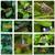 tırtıl · makro · atış · kelebek · ayarlamak · başlatmak - stok fotoğraf © ewastudio