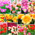 kleurrijk · bed · roze · bloemen · oranje - stockfoto © ewastudio