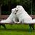 canino · educación · perro · ejecutando · hombre · feliz - foto stock © ewastudio