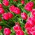 colorido · tulipas · belo · flores · da · primavera · flores · páscoa - foto stock © EwaStudio
