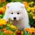犬 · 風景 · 庭園 · フィールド · 教育 · 緑 - ストックフォト © EwaStudio