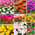 Tulips collage. Spring flowers stock photo © EwaStudio