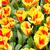 printemps · domaine · floraison · coloré · tulipes · Pâques - photo stock © ewastudio