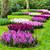 flor · da · primavera · jacinto · verde · azul · planta · parque - foto stock © ewastudio
