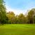 carvalho · árvores · verde · prado · primavera · dia - foto stock © ewastudio