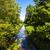 rivier · groene · vers · bladeren - stockfoto © ewastudio