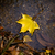 Geel · esdoornblad · zwemmen · water · regen - stockfoto © ewastudio