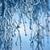 huş · ağacı · ağaçlar · gökyüzü · ağaç · ahşap - stok fotoğraf © fanfo