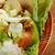 Салат · пластина · простой · древесины · куриные · вилка - Сток-фото © fanfo