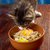 cat tries oat porridge stock photo © fanfo