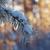 tél · tájkép · naplemente · bokor · száraz · piros - stock fotó © fanfo