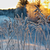tél · csodaország · erdő · fa · tájkép · hó - stock fotó © fanfo