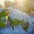 maravilhoso · de · manhã · cedo · colorido · árvore · natureza - foto stock © fanfo