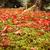 jesienią · liści · zielone · mech · drzewo · trawy - zdjęcia stock © fatalsweets