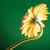 amarelo · flor · branco · natureza · folha - foto stock © feedough