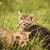 baby cats playing in the grass stock photo © feedough