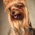 yorkshire · terriyer · köpek · şerit · güzel · mavi - stok fotoğraf © feedough