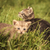 adorable · triste · blanco · negro · gatito · blanco · negro - foto stock © feedough