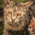 kettő · macskák · fű · Kiotó · Japán · utca - stock fotó © feedough