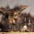 furry lion head rabbit bunnys looking at the camera stock photo © feedough