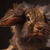 close up picture of a cute lion head bunny rabbit stock photo © feedough