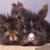 due · leone · testa · coniglio · seduta · legno - foto d'archivio © feedough