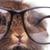 фотография · лев · голову · кролик · Bunny · носа - Сток-фото © feedough