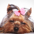 sonolento · brinquedo · branco · cão · cachorro - foto stock © feedough