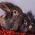 peloso · rosolare · leone · testa · coniglio · coniglio - foto d'archivio © feedough
